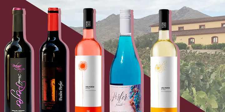 ¿Cuál es la copa más adecuada para cada tipo de vino?
