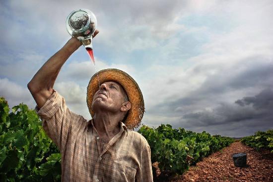 Las mejores ciudades de vino de España
